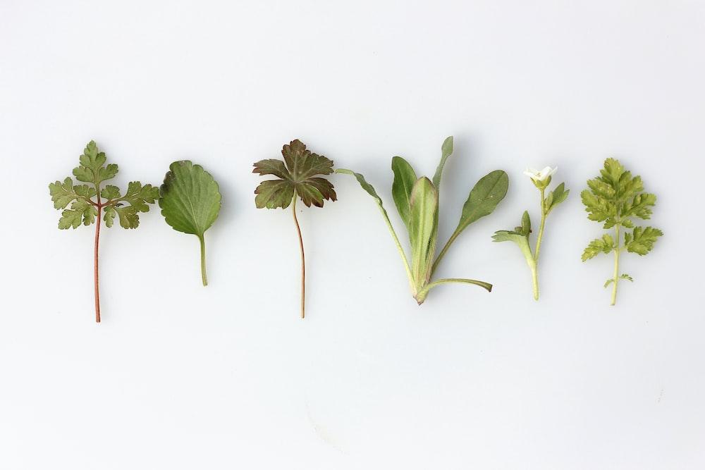 six leafy vegetables