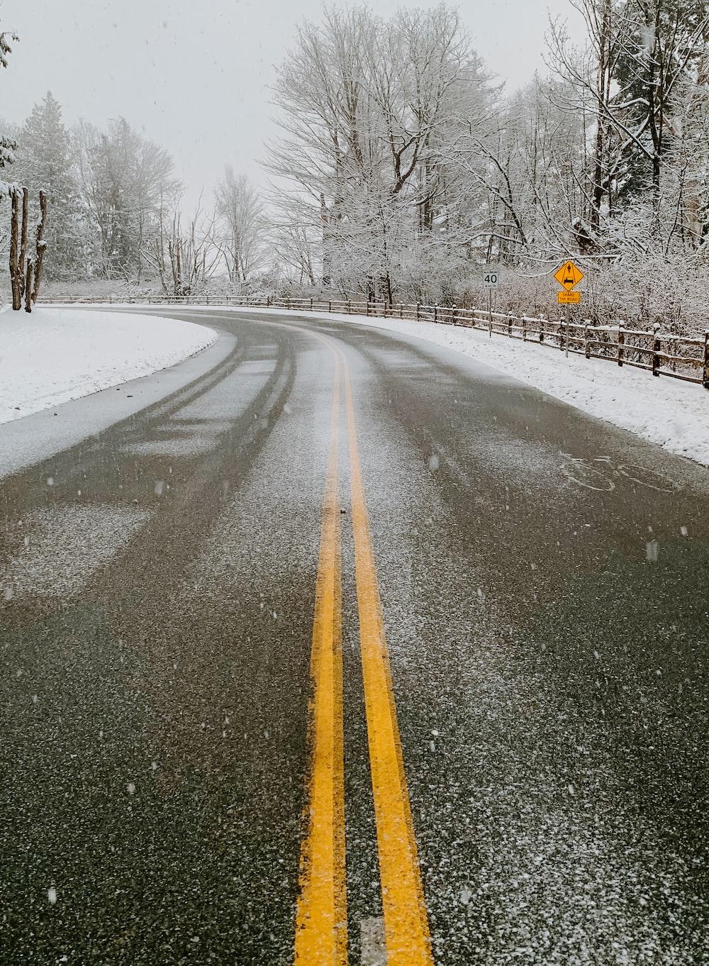 grey asphalt road between snow covered trees