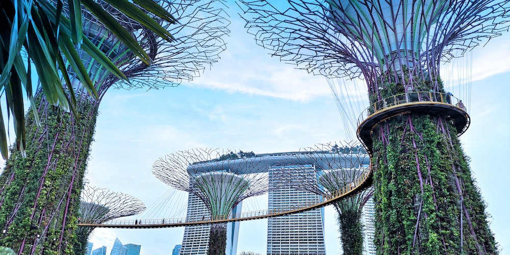 low-angle photography of Gardens by the Bay in Singapore