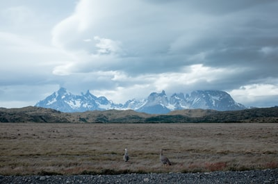 brown field patagonia zoom background