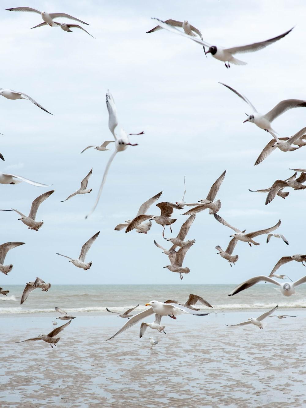 flying birds at daytime