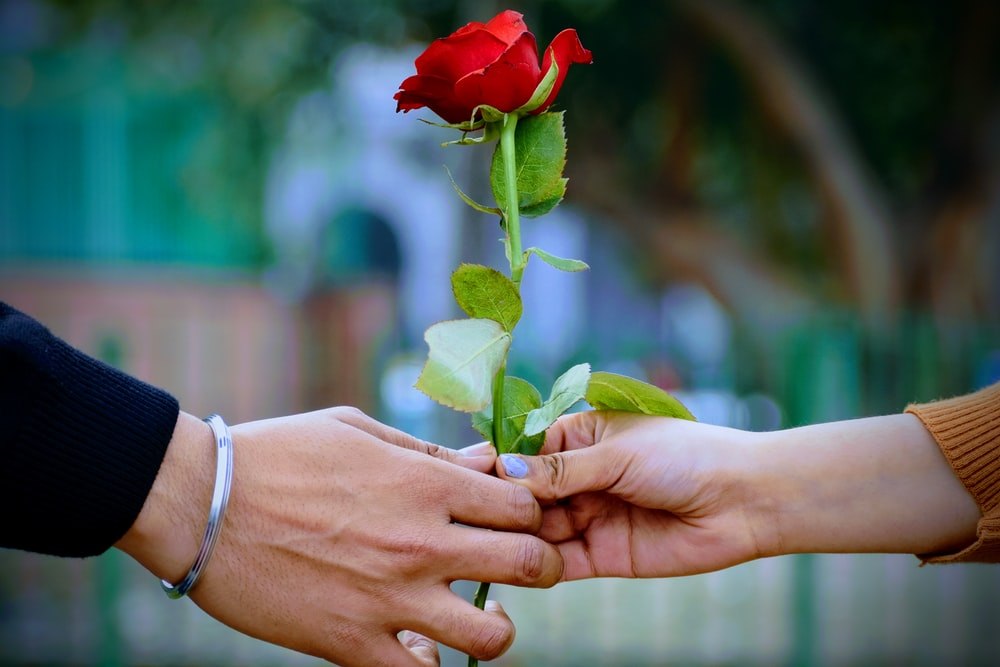 man and woman holding a red rose flower
