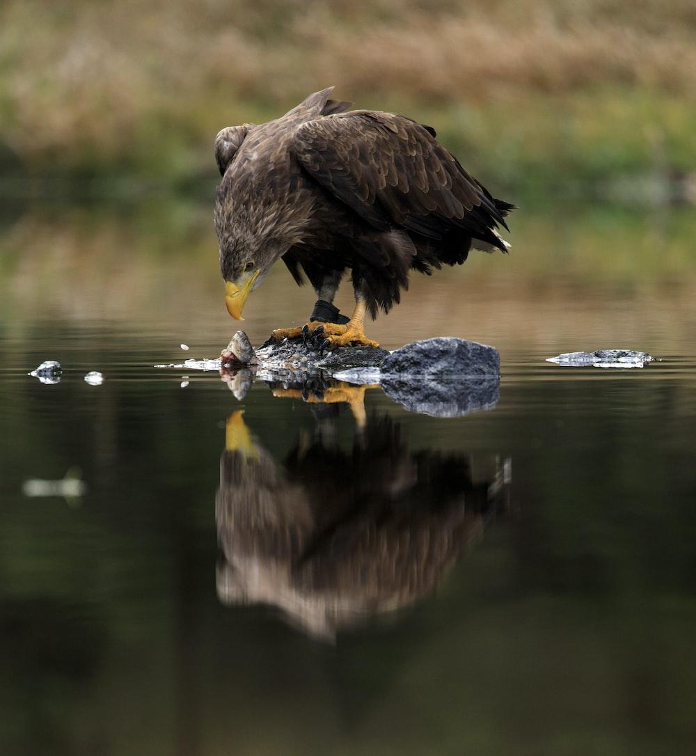 brown bird on water during daytime