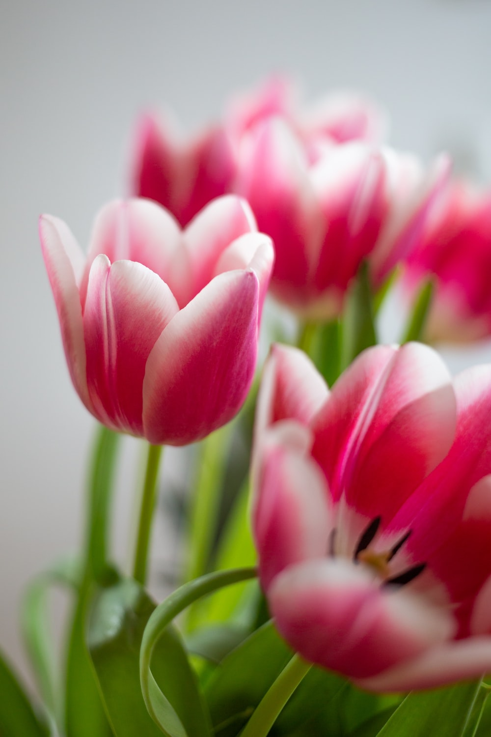 close-up photography of pink flowrs