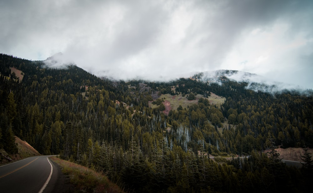 mountain roadside during daytime
