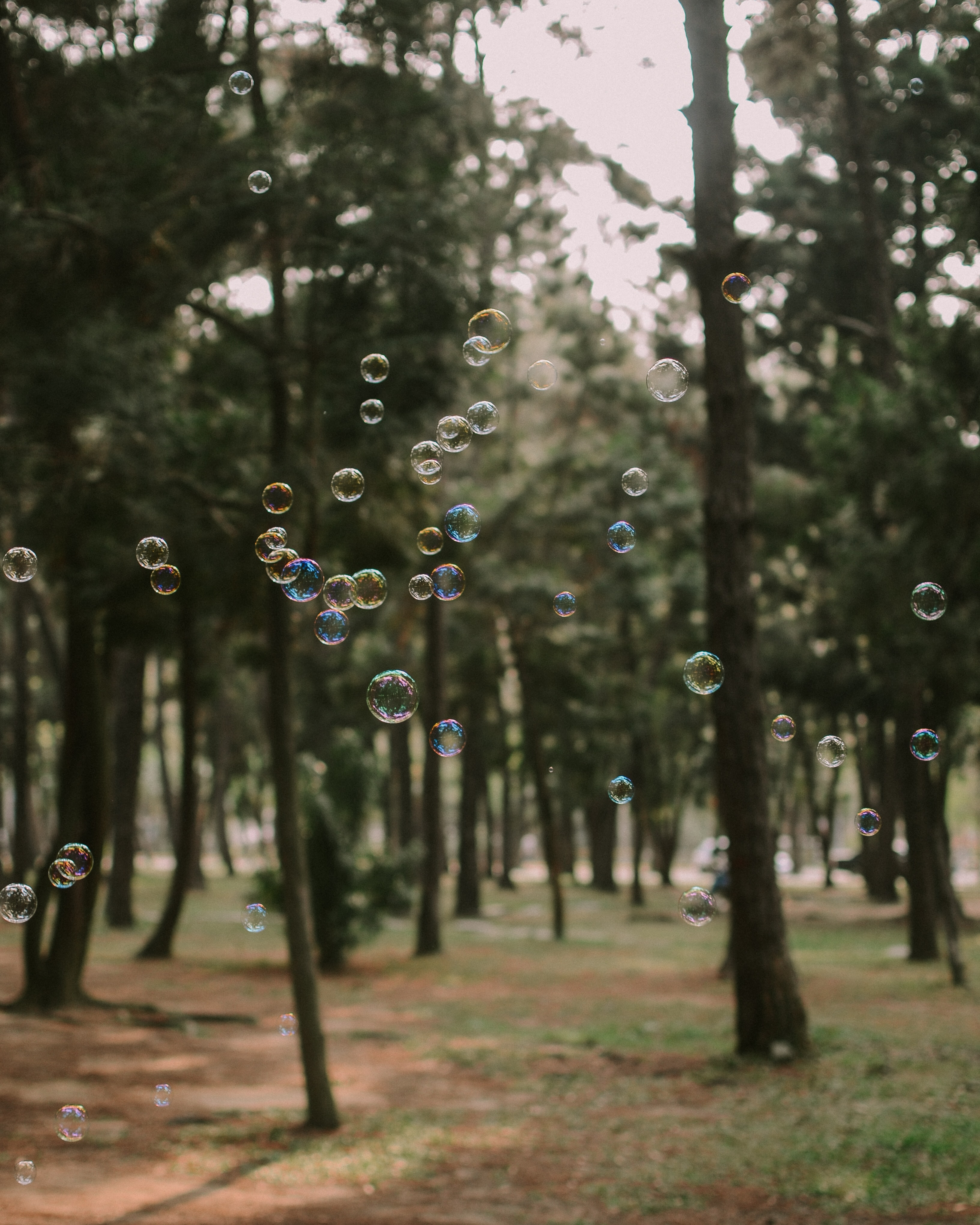 selective focus photography of bubbles with tree as background