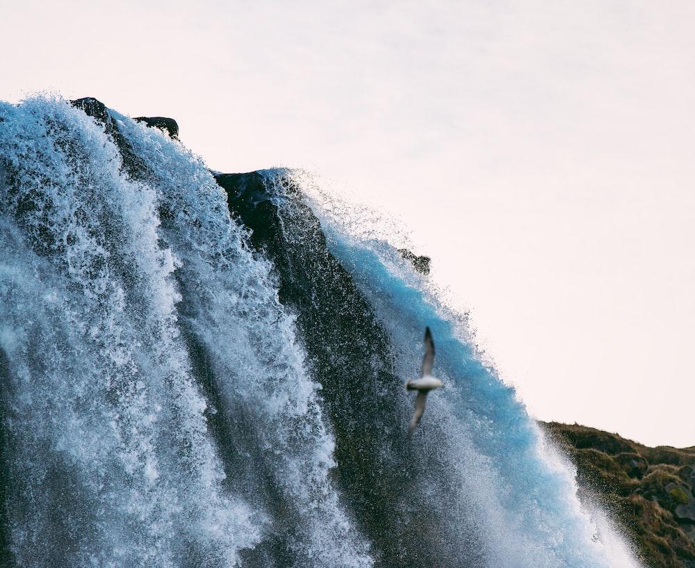 seagull flying near waterfalls