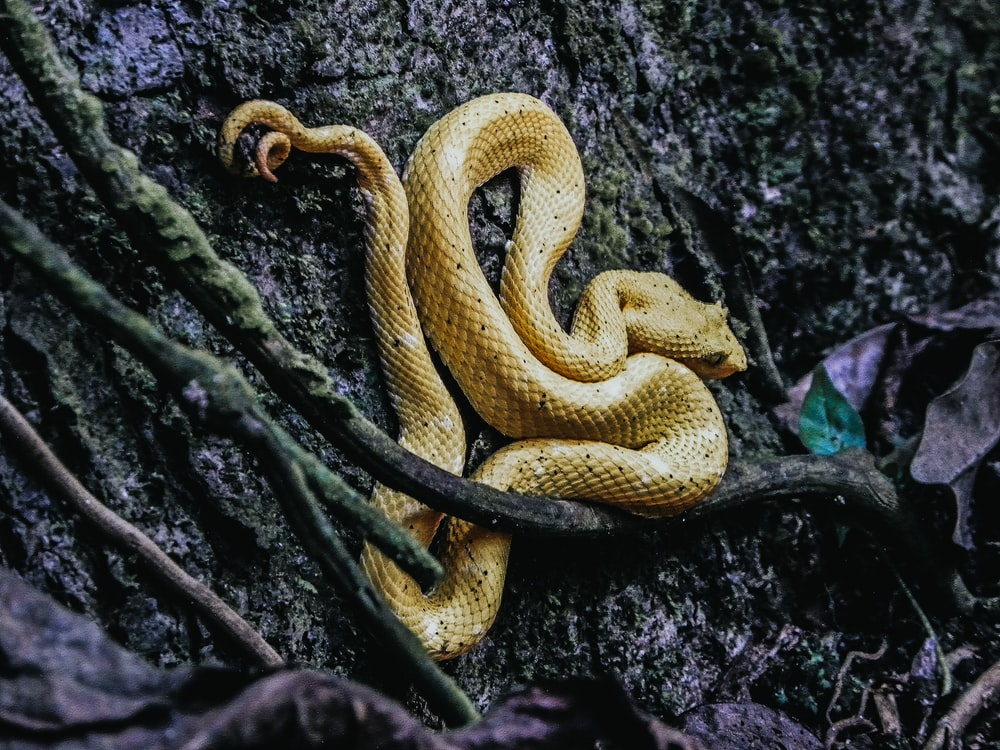 brown snake on the ground