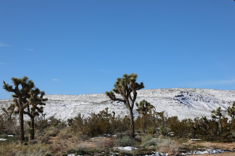 green fan palm near snow covered mountain under blue sky during daytime