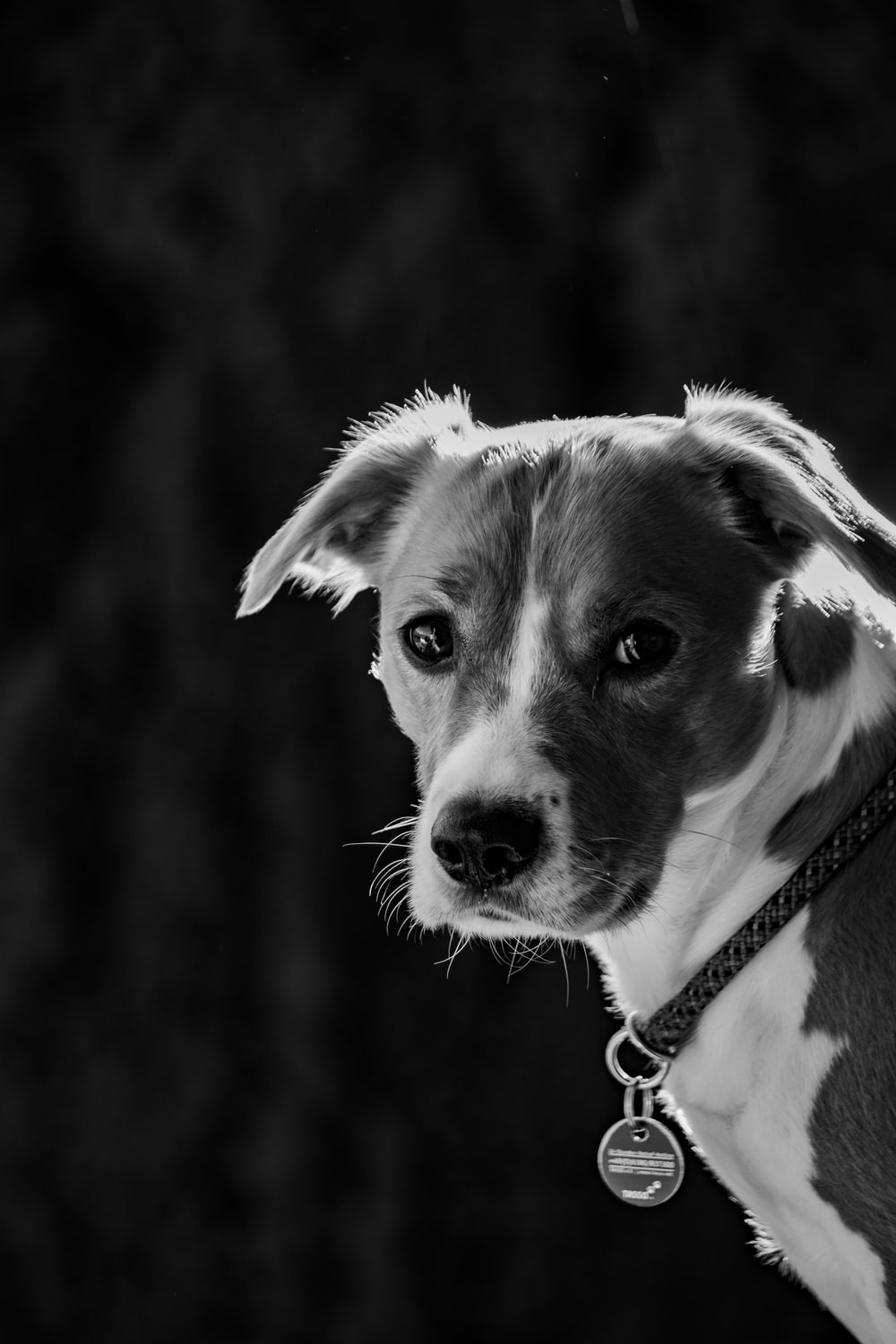 grayscale photo of puppy