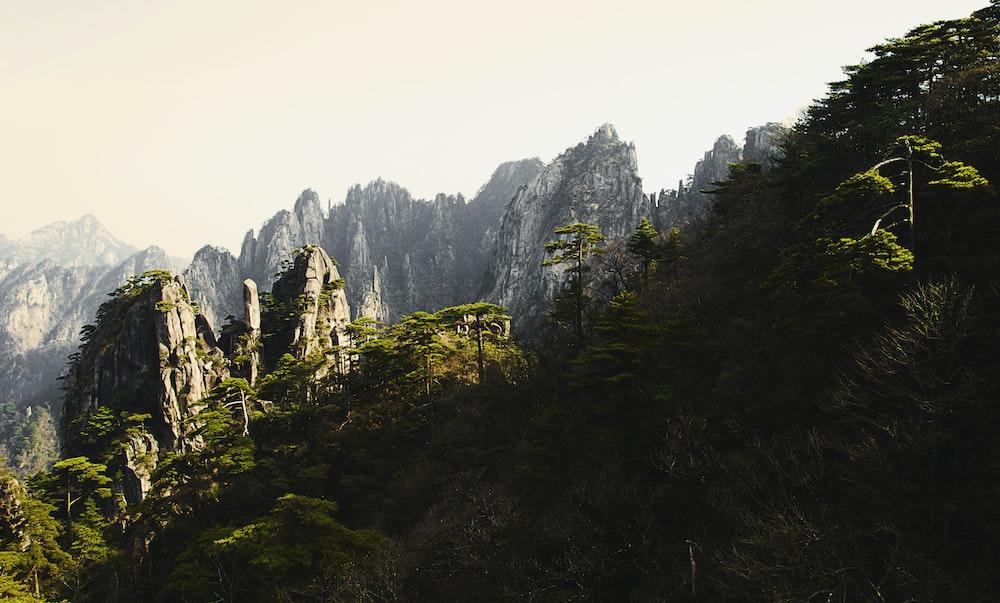 green trees near cliff