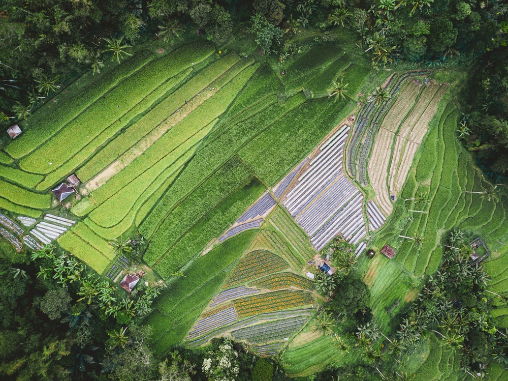 aerial photography of plant field during daytime