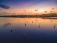 birds in water during golden hour