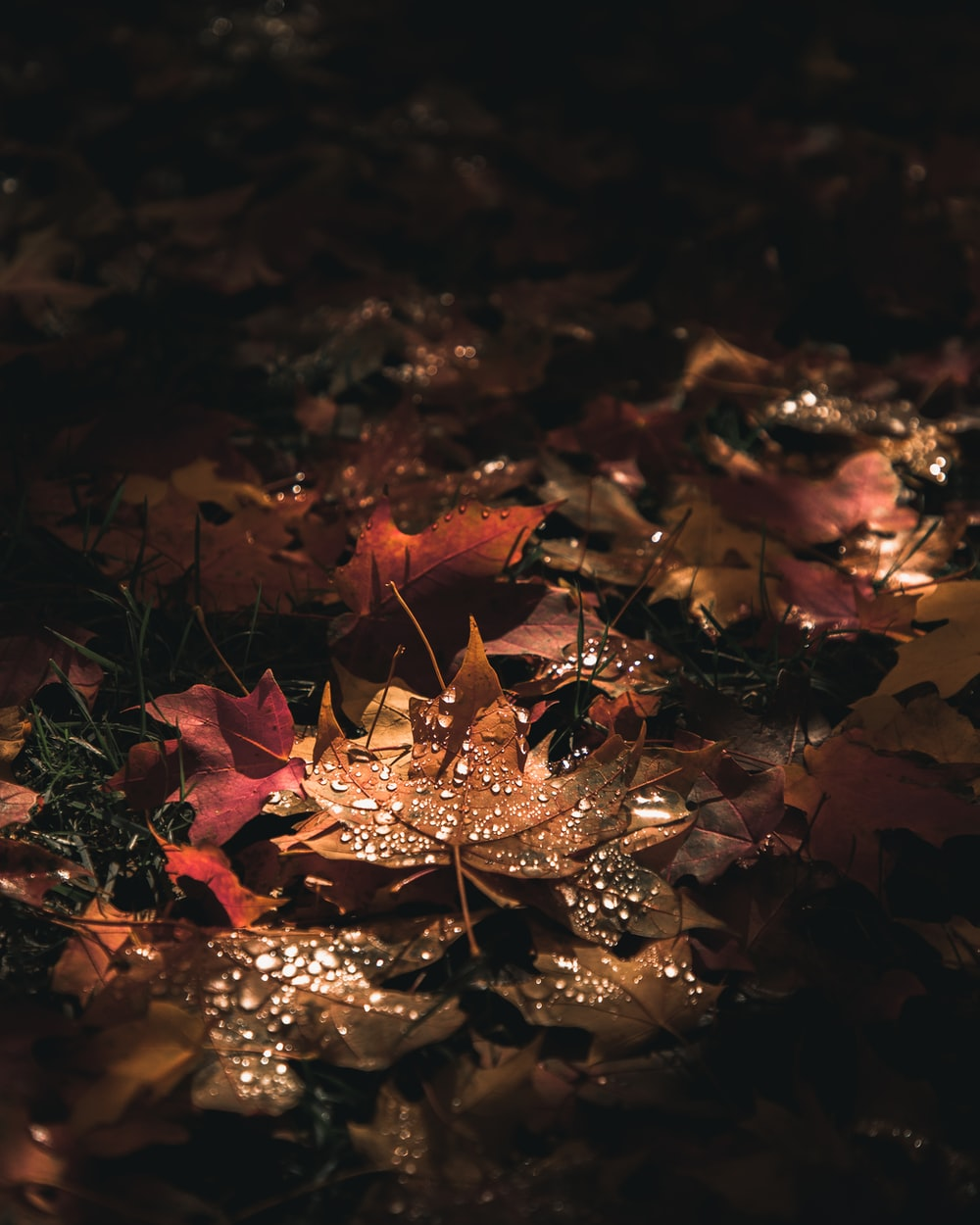selective focus photo of maple leaves