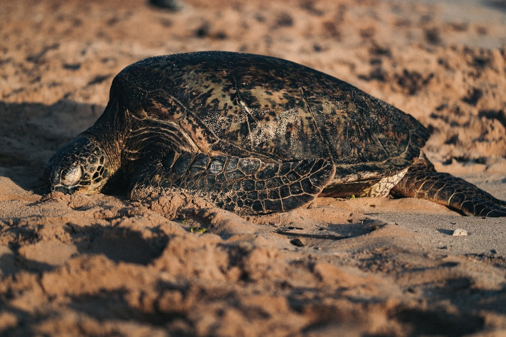 turtle on seashore