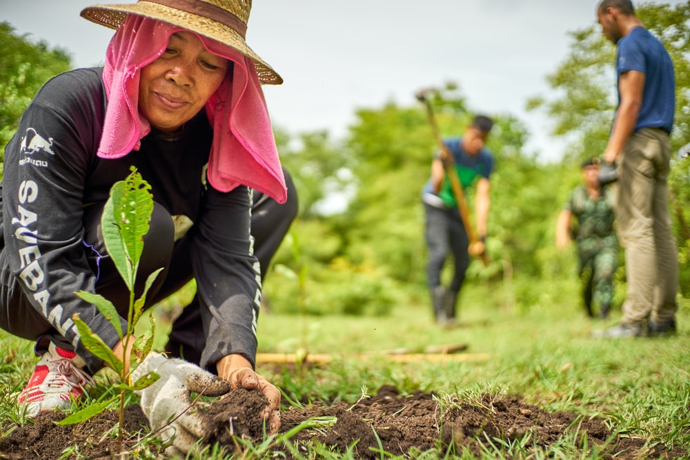 woman planting plant during daytime