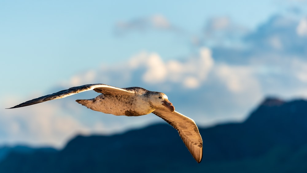 selective focus photography of flying bird during daytime