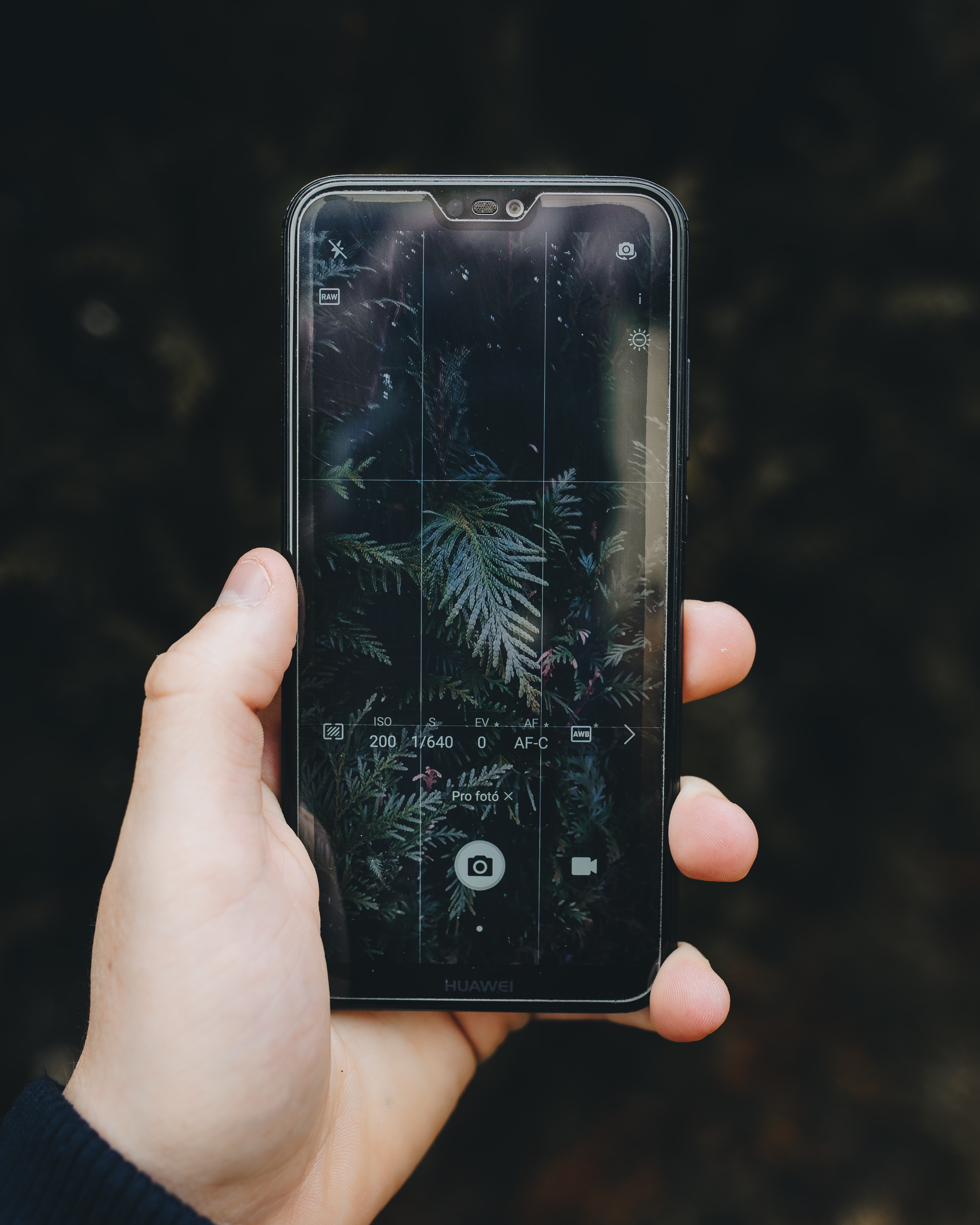 person holding iPhone about to take photo of plants