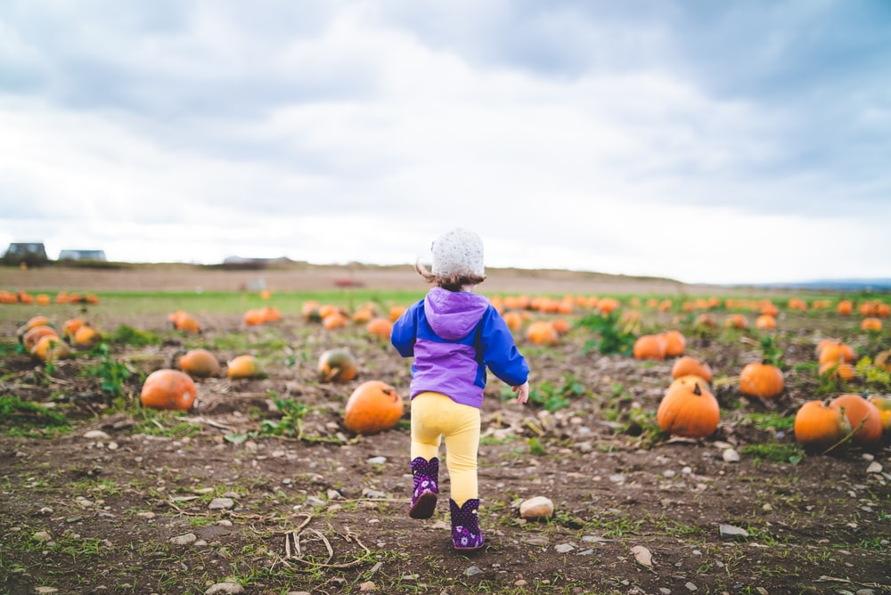 toddler standing near pumpkins on ground