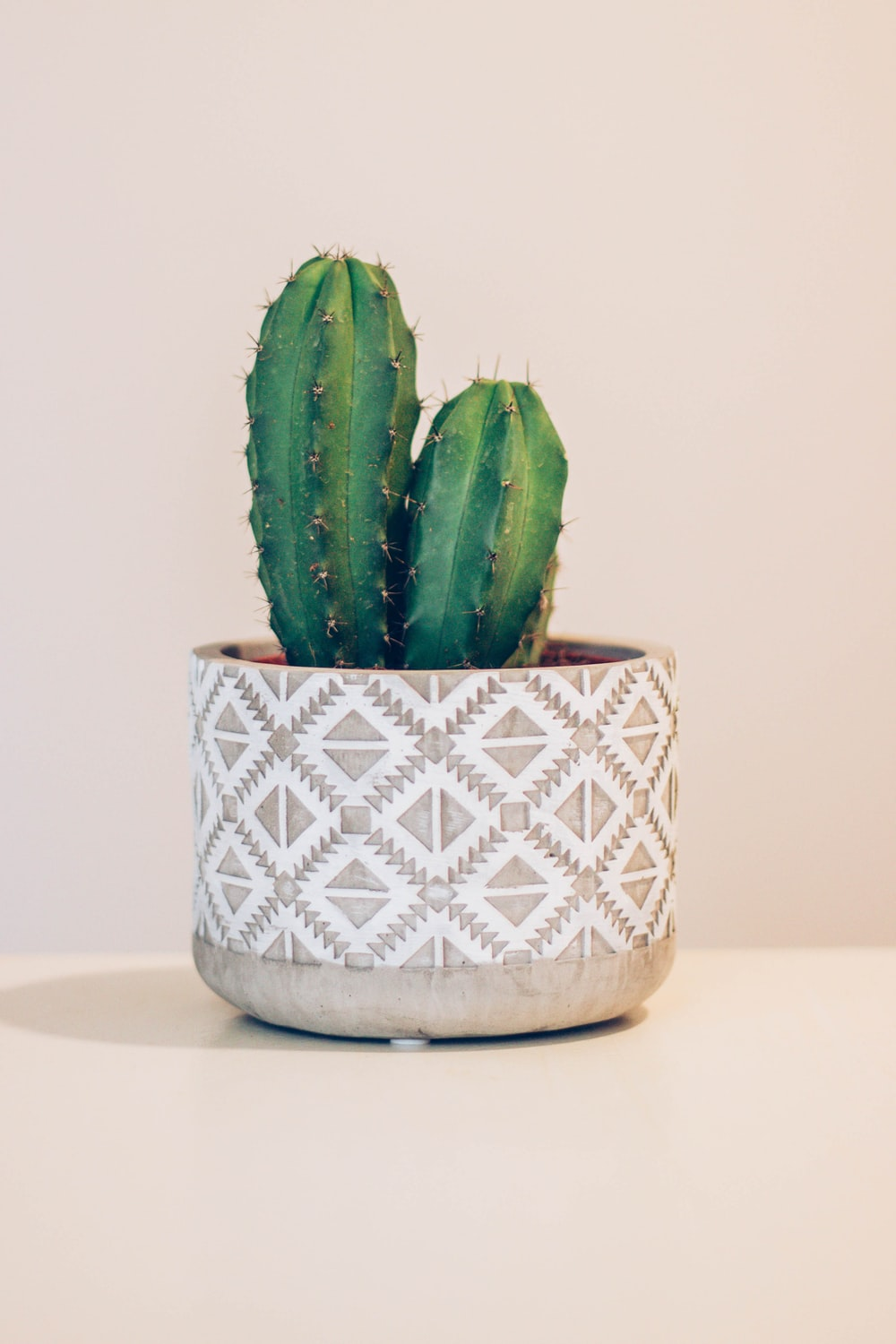 green cactus in beige and white pot