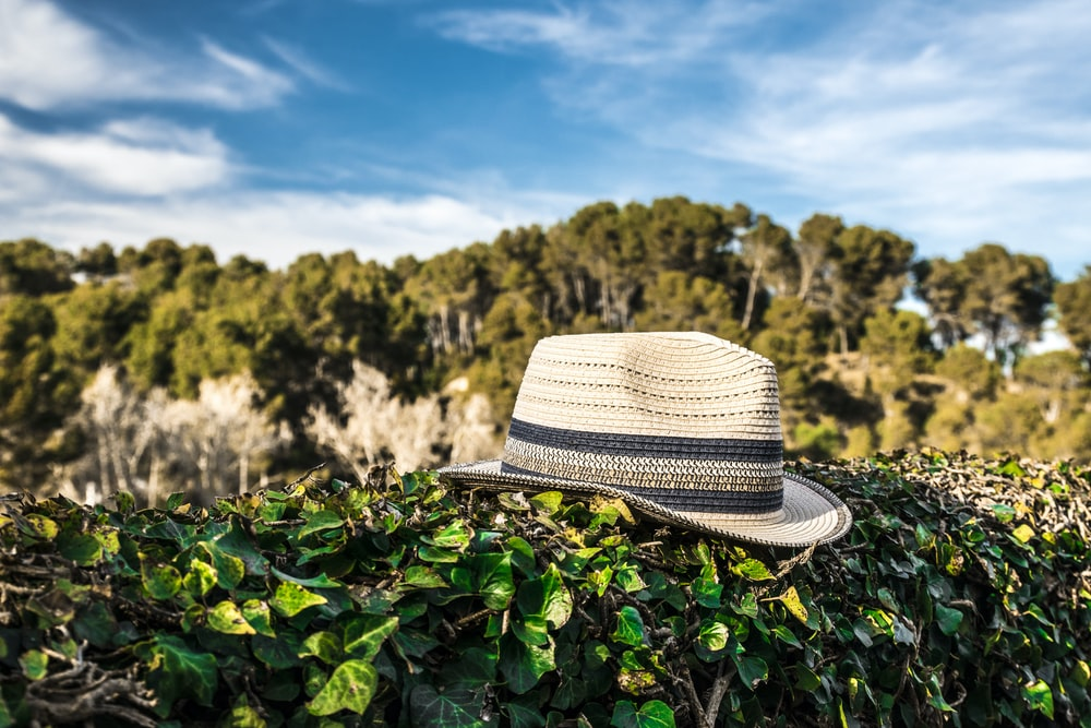 beige and black fedora hat on green-leafed plant
