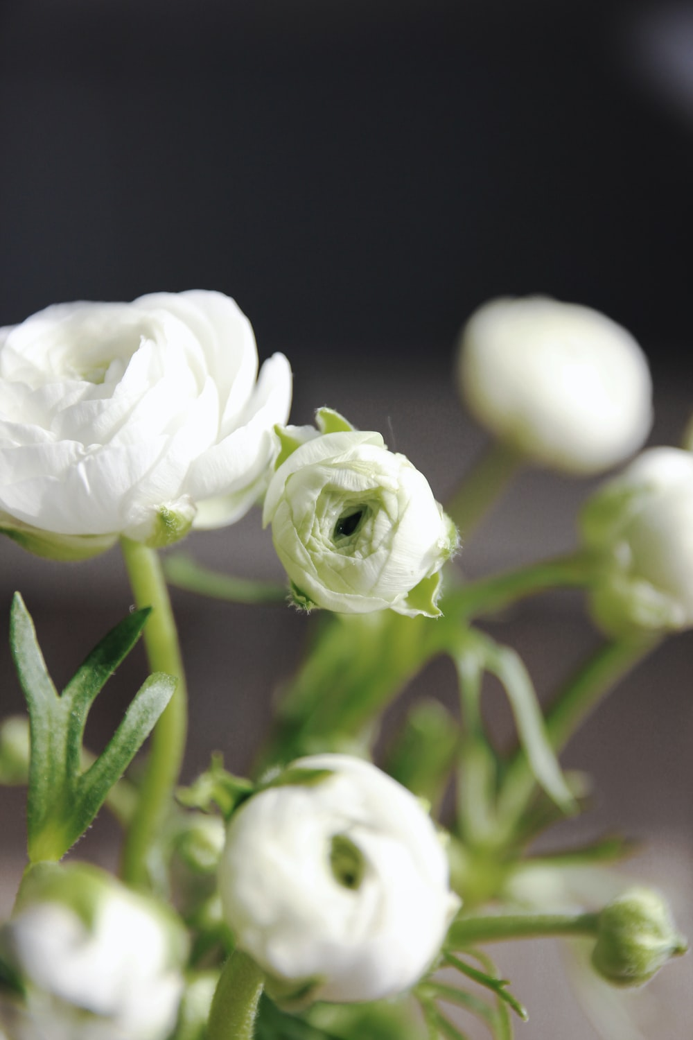 white peonies in selective focus photography