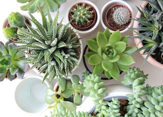 assorted succulents and cacti