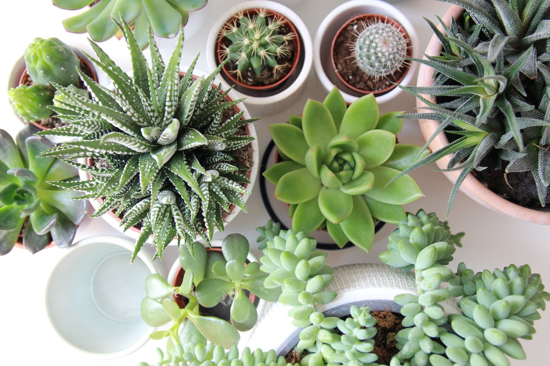 An array of succulents in differently sized planters