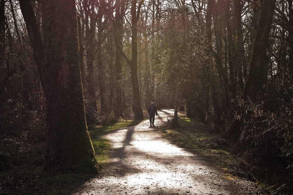 person standing at pathway between trees