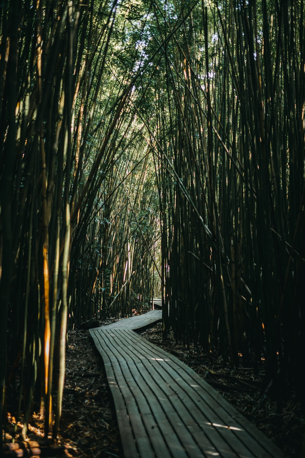 pathway in bamboo field