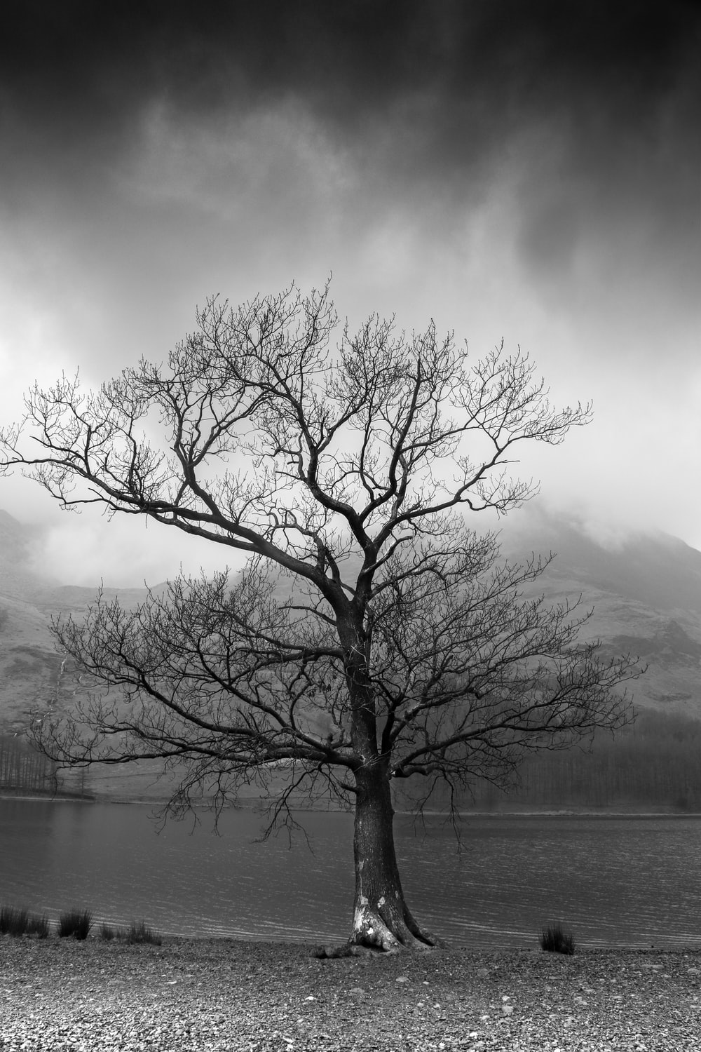 a gloomy scorched tree in darkness