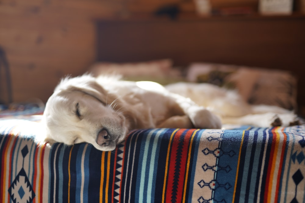 pet dog laying on bed
