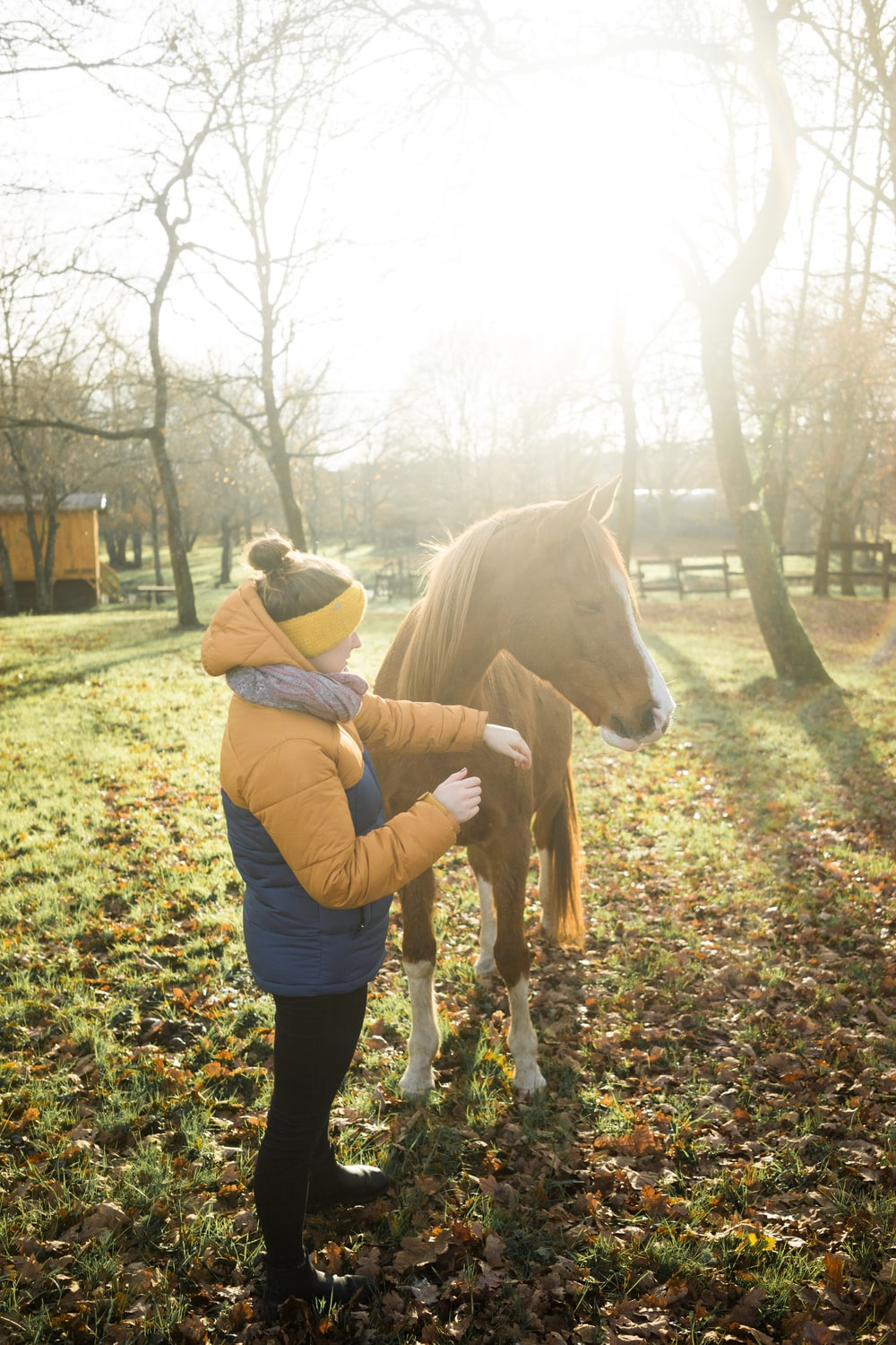 person standing beside horse near bare trees during day