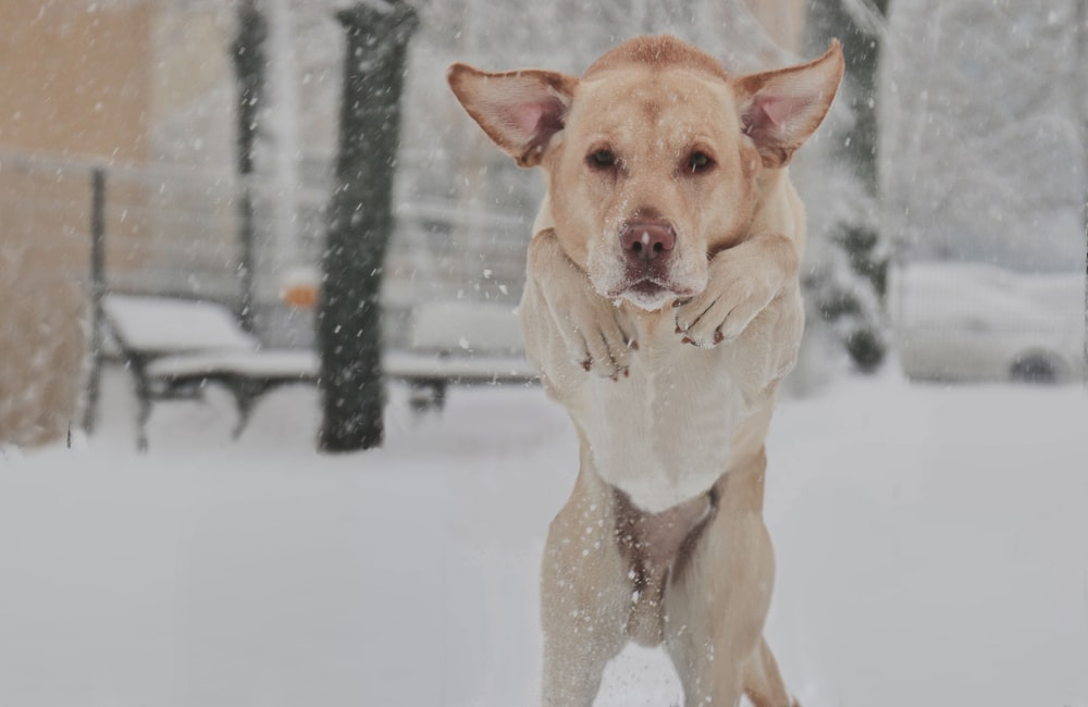 selective focus photography of dog on snowfield