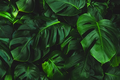 green-leafed plant plant teams background
