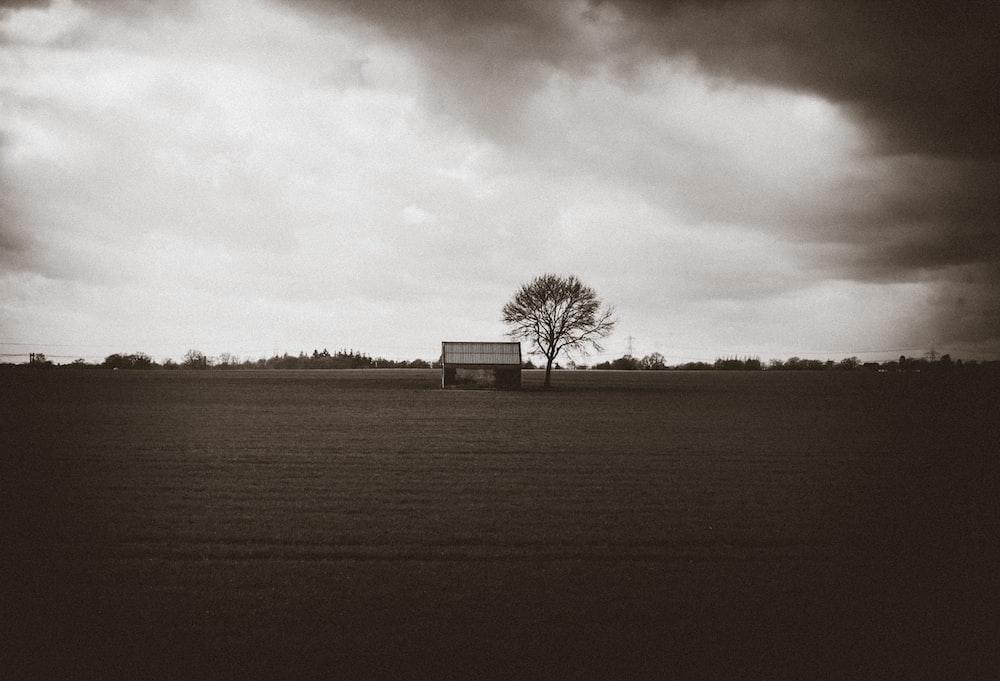 gray wooden house near tree under gray skies
