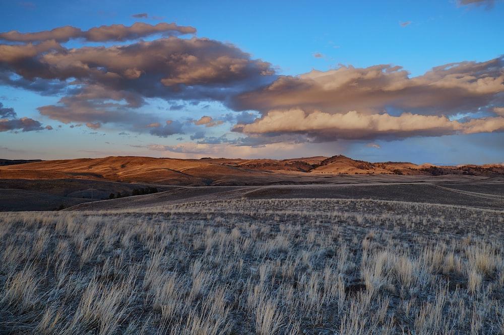gray grass field under gloomy sky