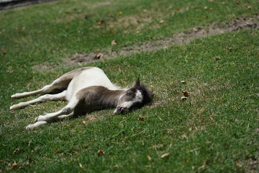 sleeping horse on green grass at daytime