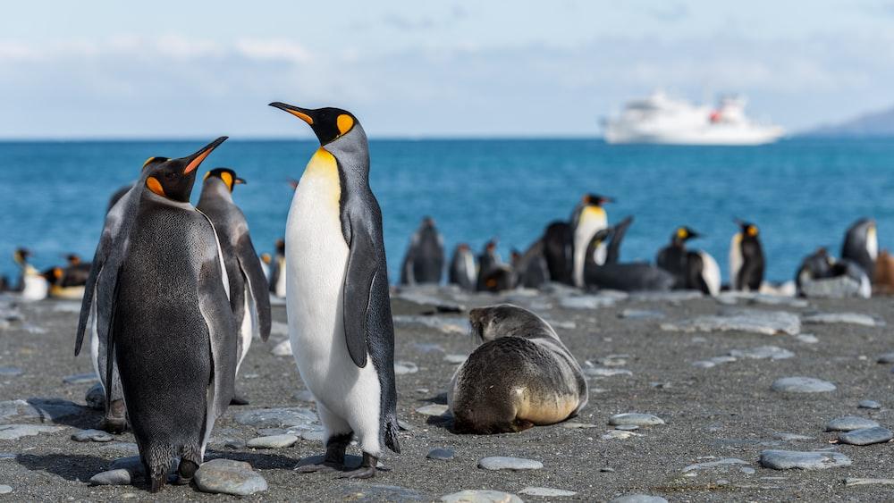 penguins in seashore