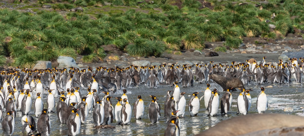 flock of white-and-black penguins on seashore