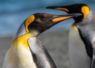 selective focus photography of penguin