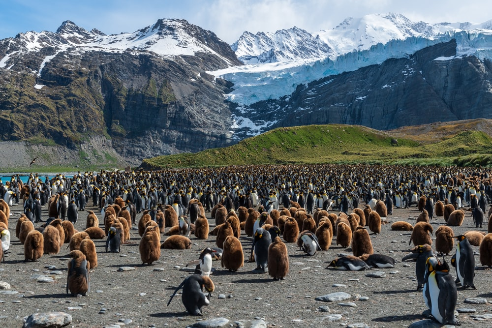 flock of penguins across white mountain