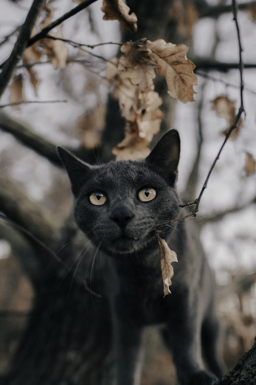 Russian blue cat under tree
