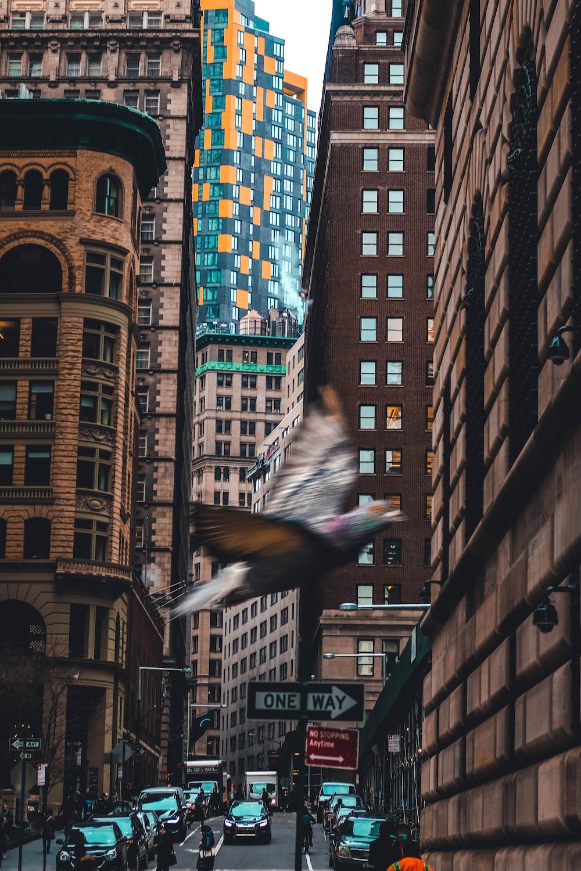 bird flying near the building