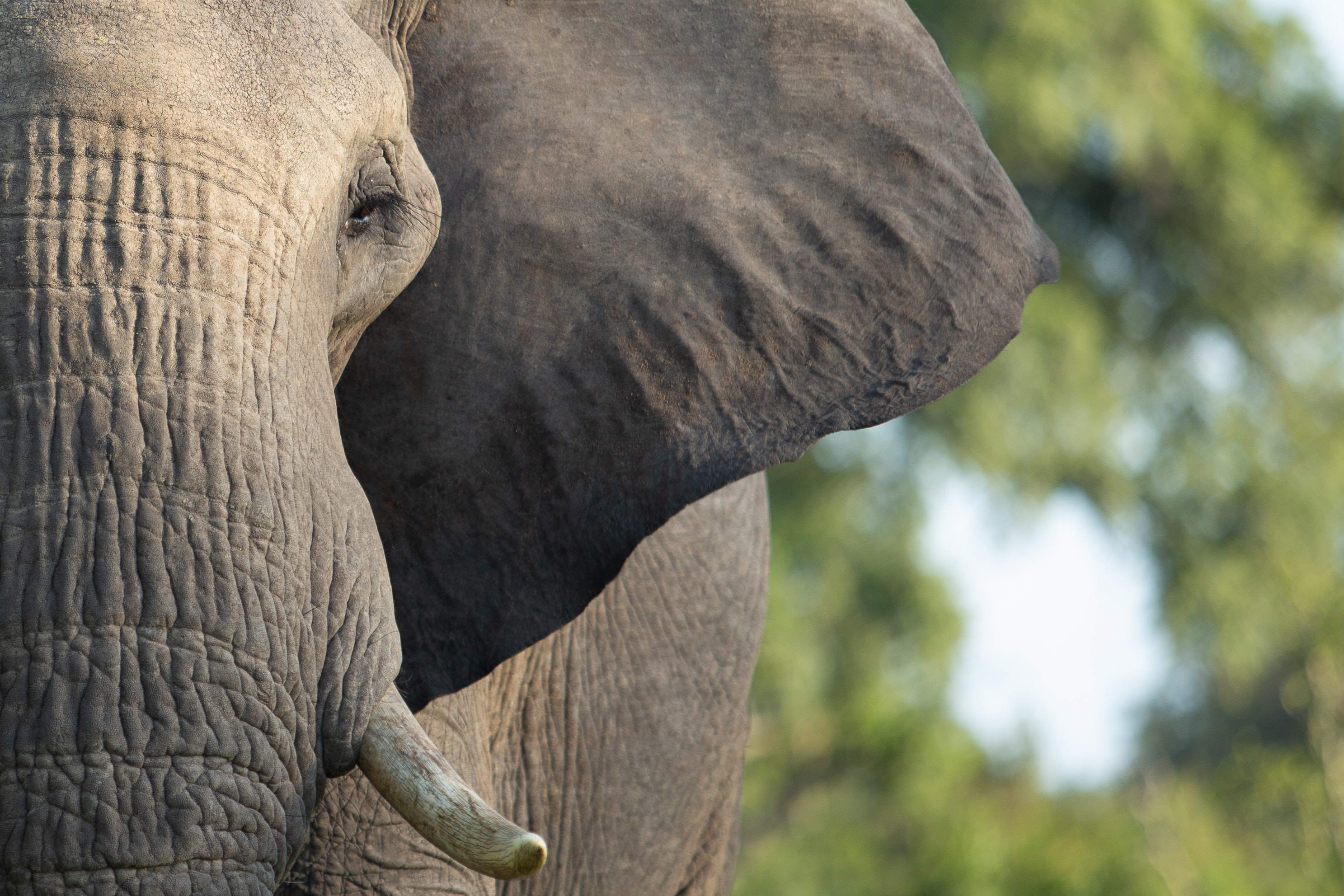 portrait of gray elephant