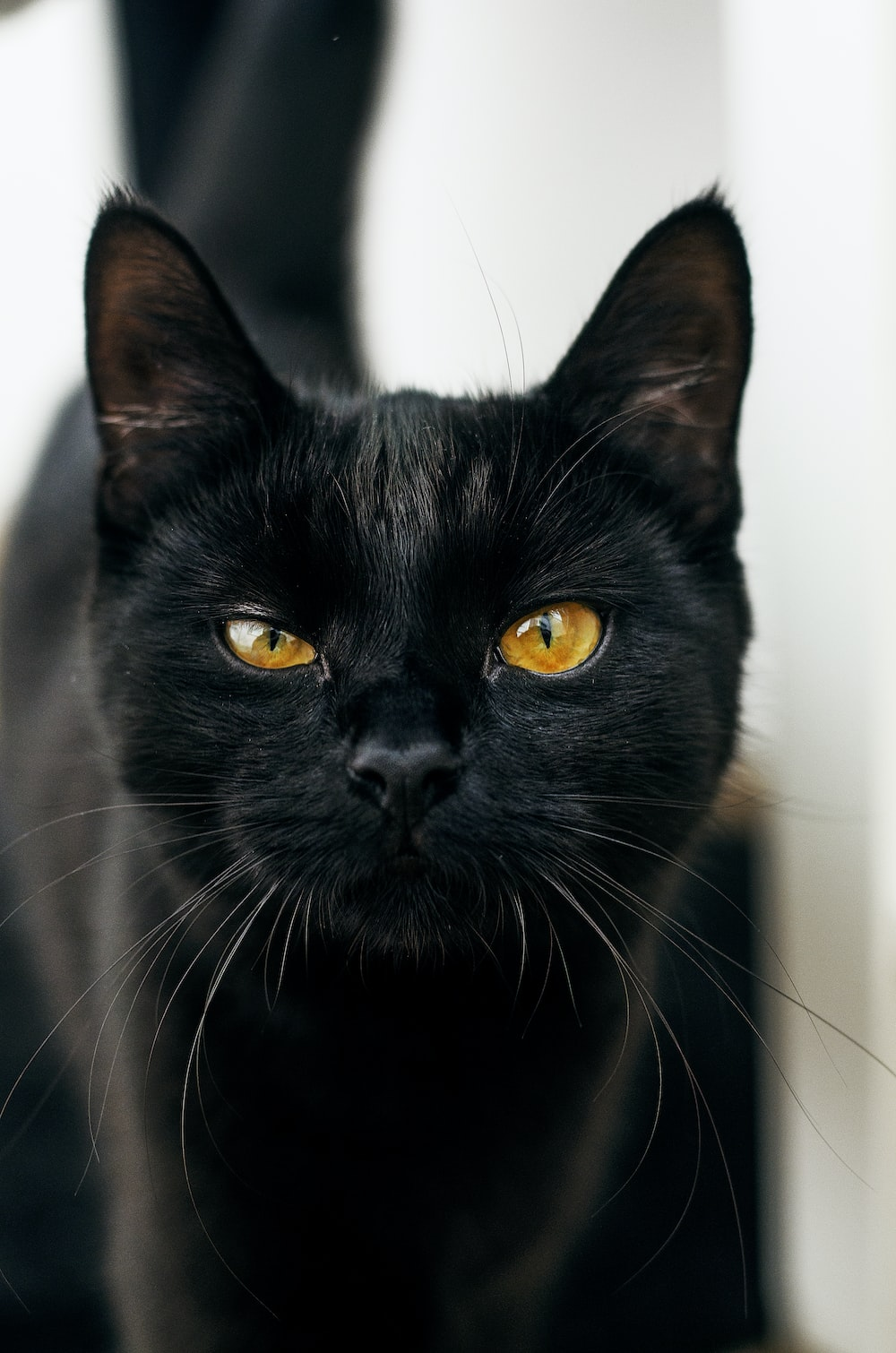 photo of black cat with yellow eyes