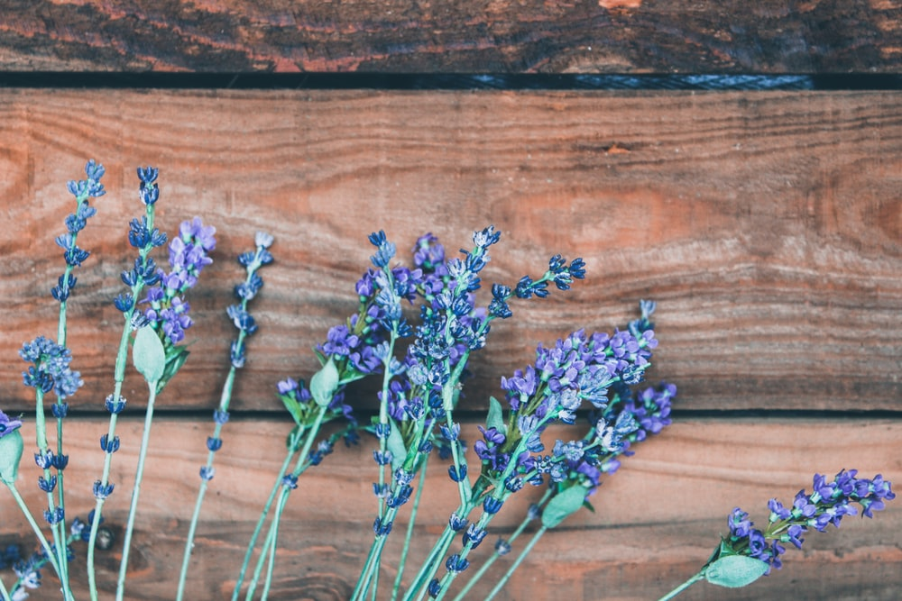 purple lavender flowers on brown wooden planks