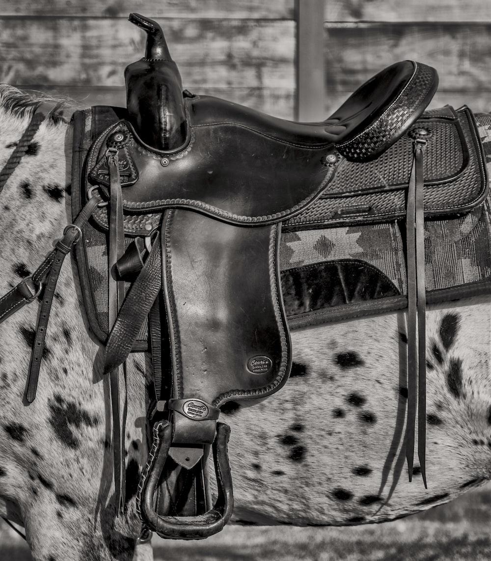 grayscale photo of black leather horse saddle