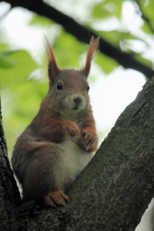 brown rabbit on tree