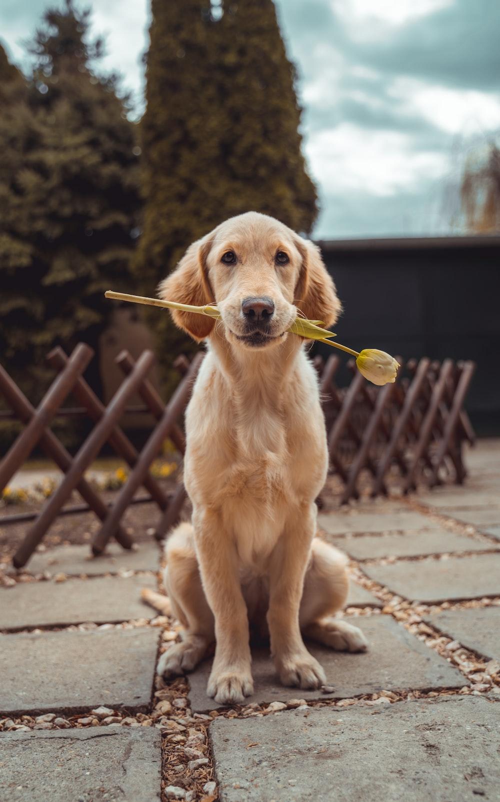 Dog Wallpapers Free Hd Download 500 Hq Unsplash